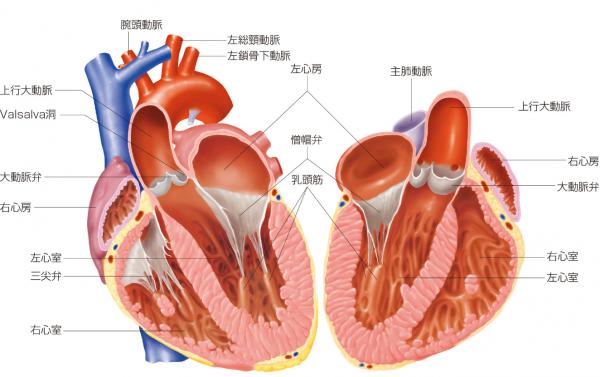 出典:インフォームドコンセントのための心臓•血管病アトラス